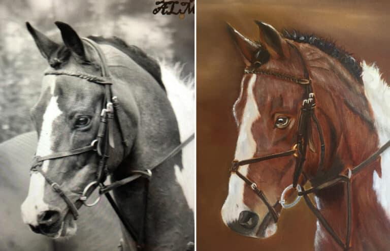 Marksman the Horse - Sue Omara Art Commissions v2
