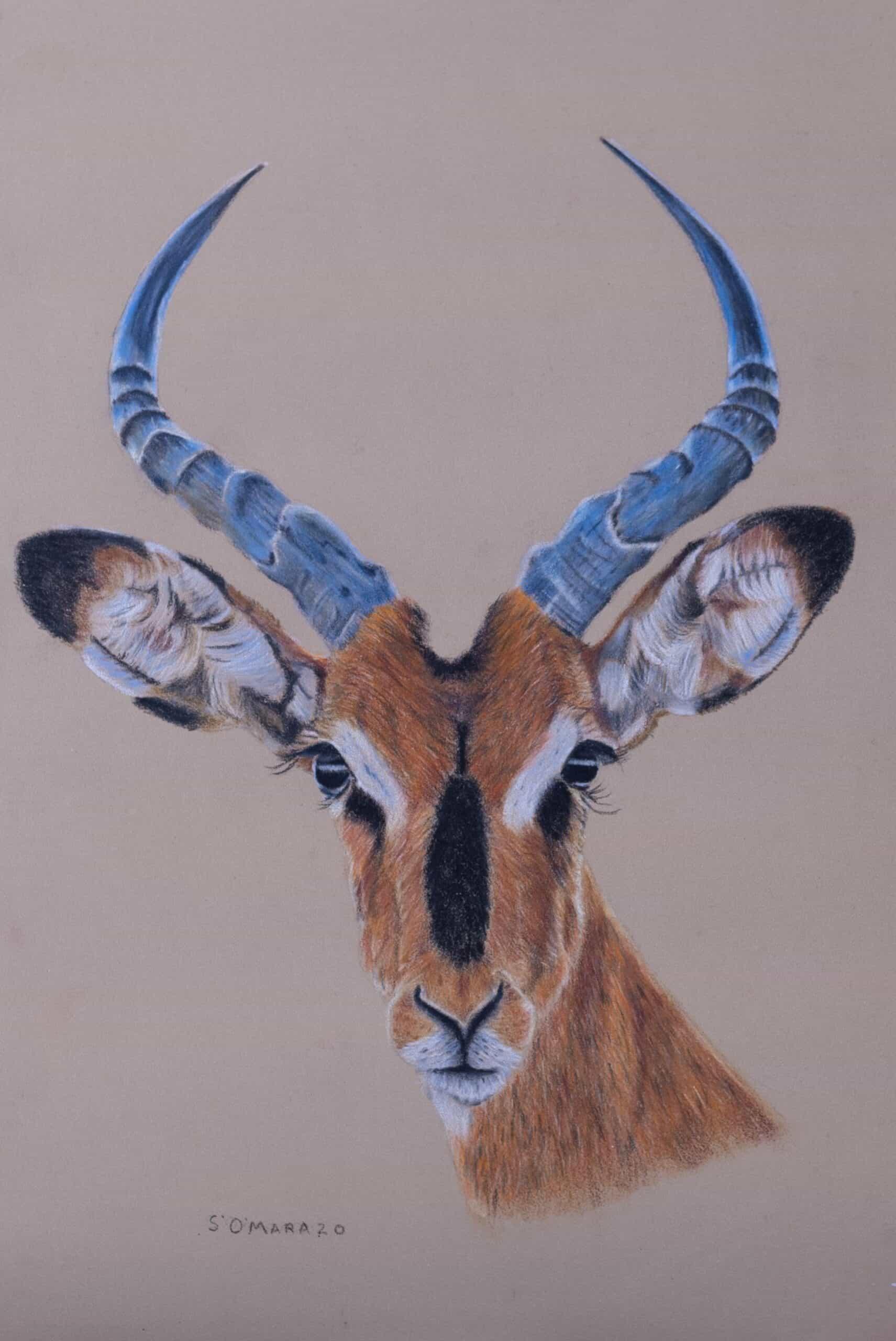 Impassive Impala