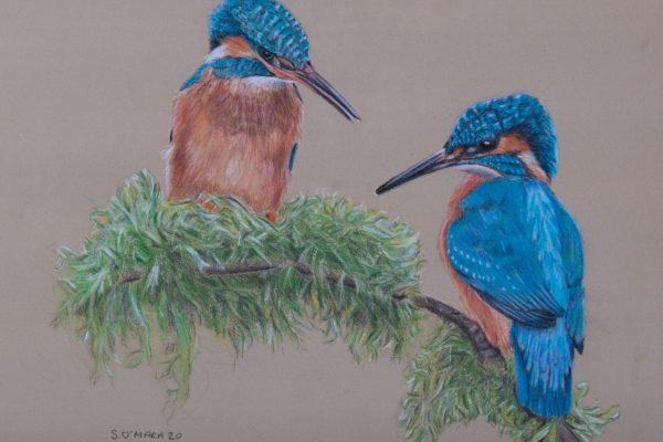 Kingfisher Couple