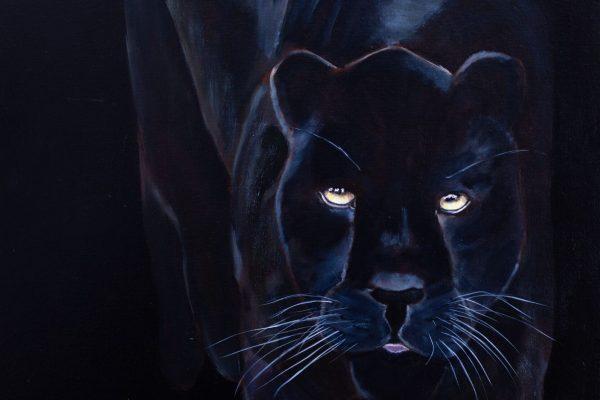 Night Time Jaguar